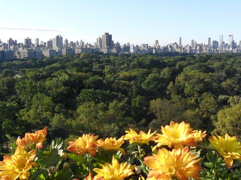 Central Park View From Terrace Facing South