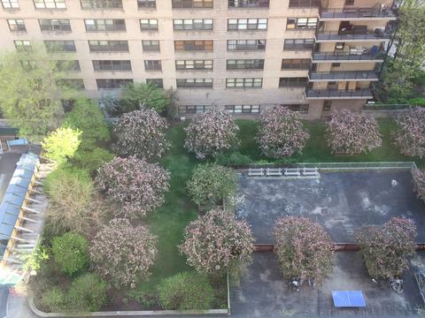 beautiful springtime view