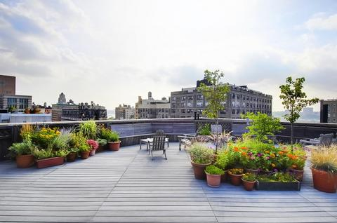 Roof Deck and garden