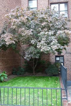 Garden outside of apartment